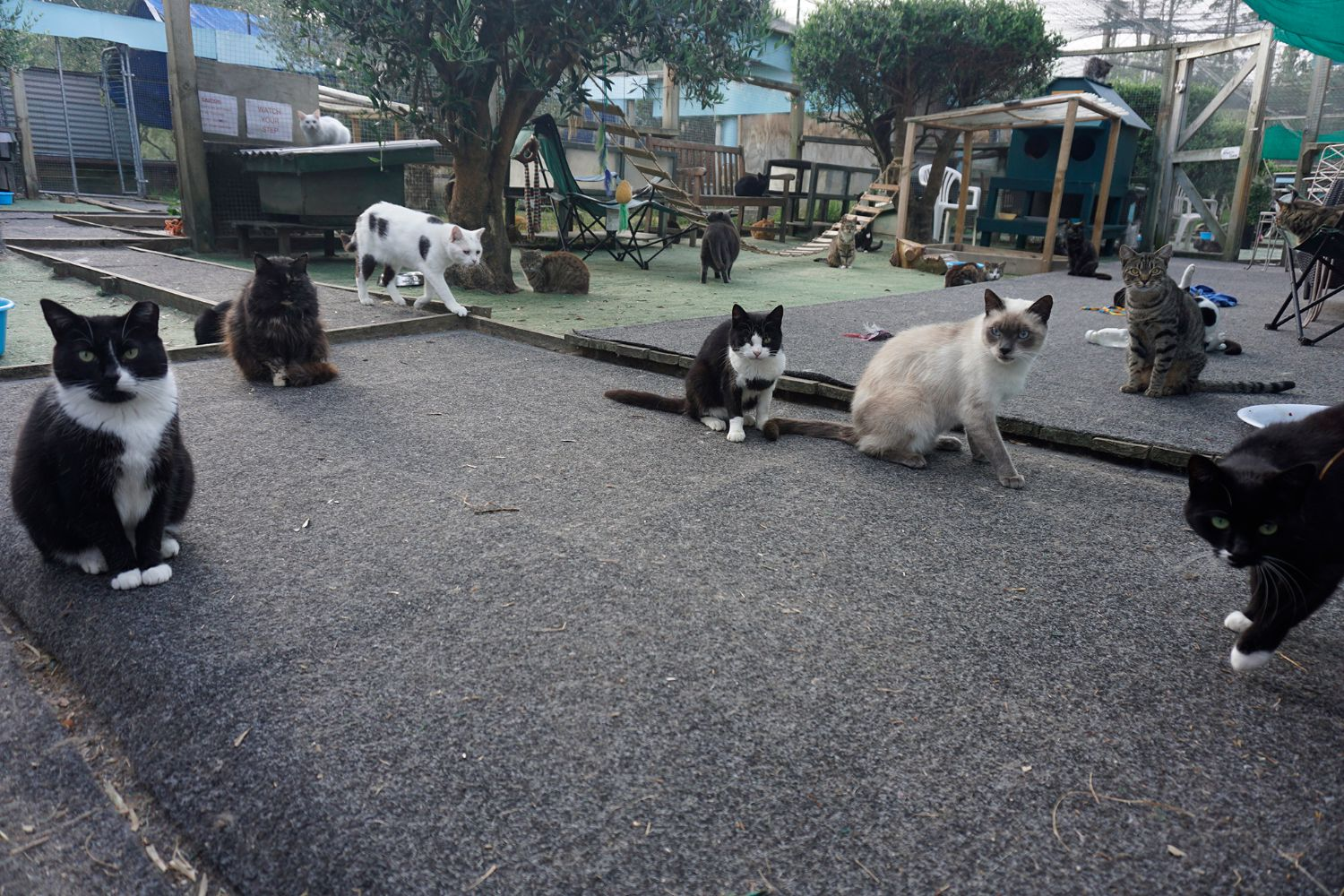 The New Zealand Cat Foundation