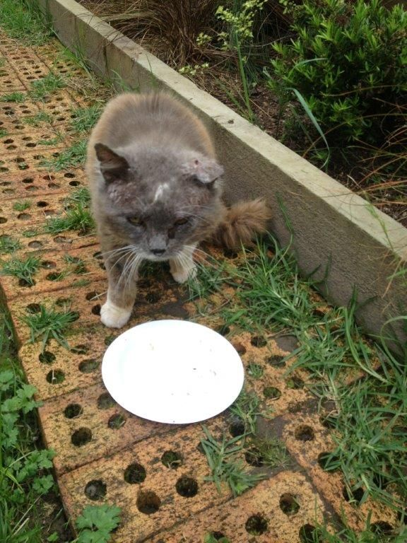 Fluffy Tom when he first arrived at the sanctuary looking very beaten up!