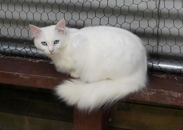 This is Sadie. She is a very timid cat who doesn't like humans. We have a lot of cats like her at the sanctuary who are not suitable for adoption.
