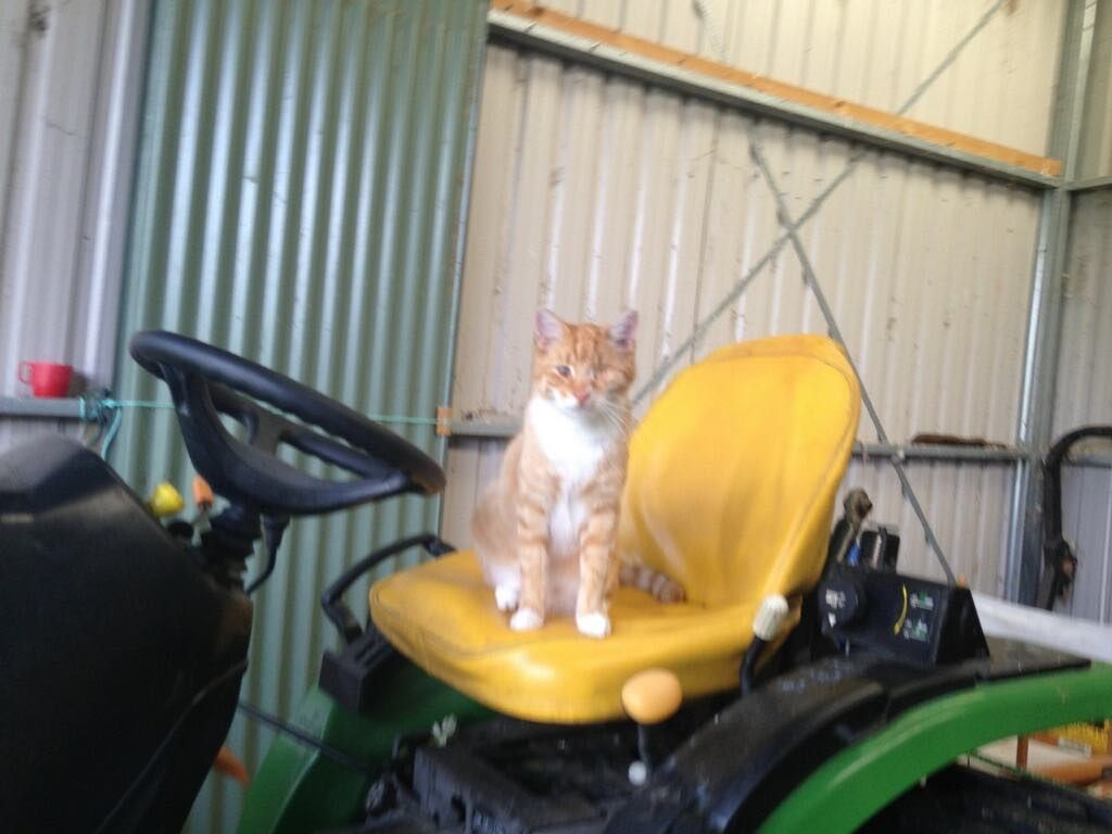 Rusty - farm manager